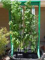 Frame_with_planted_towers_over_50_gallon_medium_