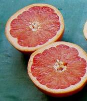 Grapefruit__ruby_red